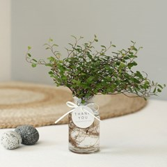 [plant] 공기정화식물 트리안 수경식물set_(638898)
