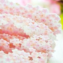 디원 벚꽃 3단 팝업카드 (JD21)