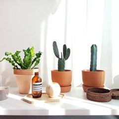 전자파 차단해주는 용신목/만세선인장 토분세트 공기정화식물