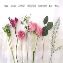 [토닥토닥] 당신의 행복한 봄날을 위해, 크림하트 장미 에디션
