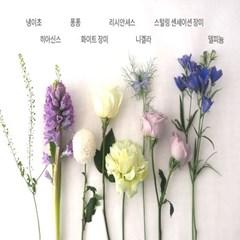 [생기가득] 하나뿐인 아름다움을 담은 히아신스 에디션