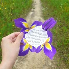 붓꽃 카드 세트 Iris card Set