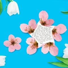 사과나무꽃 카드 세트