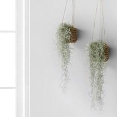 공기정화 식물로 완성하는 플랜테리어