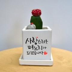 상견례선물 no.2  캘리그라피 컬러 미니화분 감동메세지를 담아♥