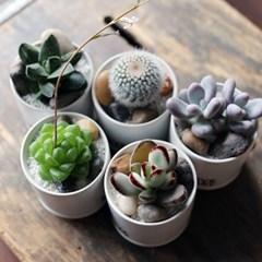 블랙앤화이트 다육미니화분 실내공기정화식물-5종세트