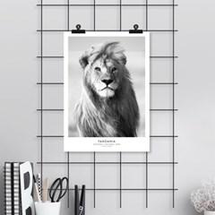 사자 동물 포스터 인테리어 그림 포스터