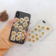 데이지꽃 생화아트 투명 아이폰 케이스