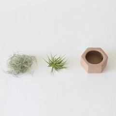 인테리어식물 틸란드시아