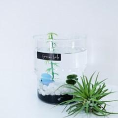 [식물연구소] 바다로 간 마리모SET