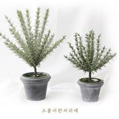 백리향 토피어리 조화 나무