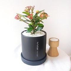 꽃피는 다육식물 꽃기린 블랙화분세트