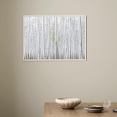 자작나무숲 힐링 사진포스터