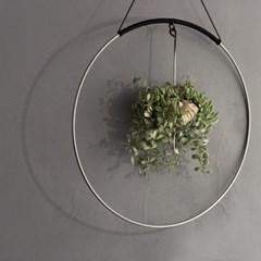 행잉플랜트 (디시디아 Dischidia White)