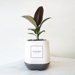 공기정화로 유명한 멜라니 고무나무 화분