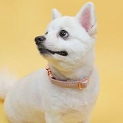 코즈니 앤프리미움 강아지 목줄 콜라 L 3종 시리즈_(1327633)