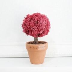 스칸디아모스 공기정화 미니식물  모스트리