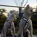 아띠지기 강아지 반사 H형 하네스 가슴줄 [13 Color]