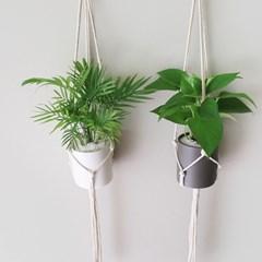 공기정화식물 무광화분 SET