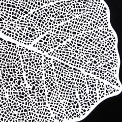 PJ190110-1 스테인레스 나뭇잎형 거름망