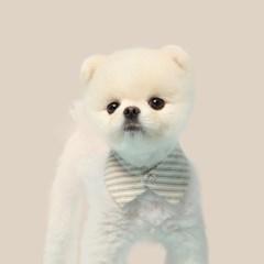 카키 스트라이프 강아지 넥카라