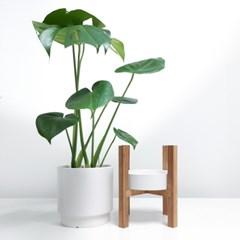 마이베프-공기정화식물+원목스탠드세트1종