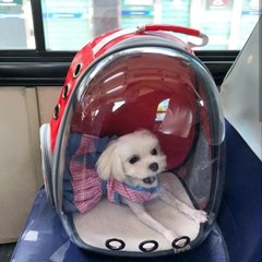 예펫 비치백팩 강아지 고양이 투명 이동가방 캐리어 이동장
