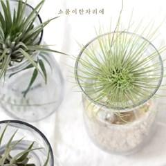 레인보우 샤이니 유리화병 ver.1