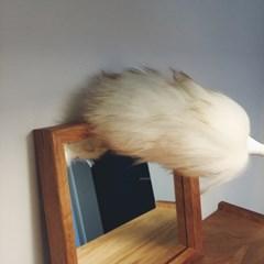 뉴질랜드 양모 먼지털이개