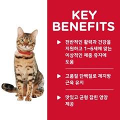 10445 NEW 힐스 고양이 어덜트 스튜(치킨/쌀) 79g x 6개