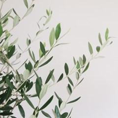 생화 올리브나무+ 왕골 라탄바구니(중대형)