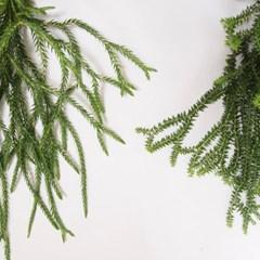 공중식물 석송(대형)