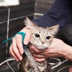 냥품멍품 냥멍 쓰담 샤워기 반려동물 전용 샤워기