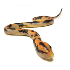 소프트 뱀(중)_갈색비단뱀 검정비단뱀 코브라