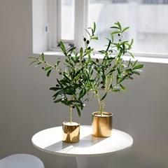 올리브나무 조화 화분
