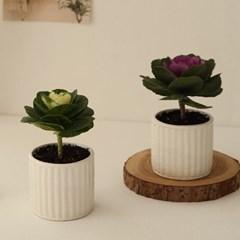 [plant] 축복해요 꽃배추 식물화분 [2color]_(684307)