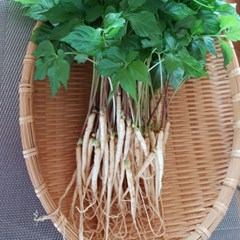남도장터/벧엘 새싹삼 중 50뿌리