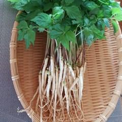 남도장터/벧엘 새싹삼 중 100뿌리