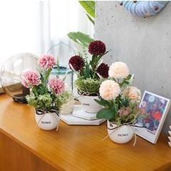 홈 다알리아 화분 3color