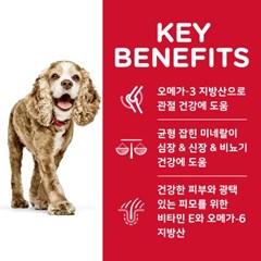 2533/NEW 힐스 강아지 어덜트 11+ 스몰포 2kg