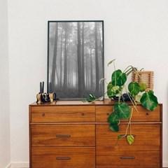 새벽의숲 사진포스터