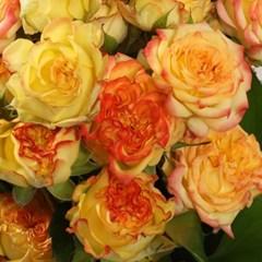 꽃선물 쇼플라워 장미 꽃다발 (생화, 전국택배)