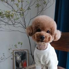 강아지 융기모 올인원 2color