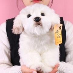 진짜같은 말티즈 강아지인형 25cm [갓샵 동물 애착 봉제인형]