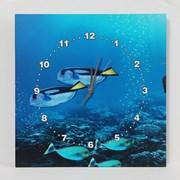 해양물고기 인테리어 벽시계/선물용 디자인 벽걸이시계