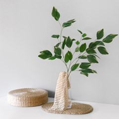 벤자민 고무나무+린넨net+롱유리병 SET