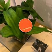 오렌지 클레멘타인 타이포 그립톡