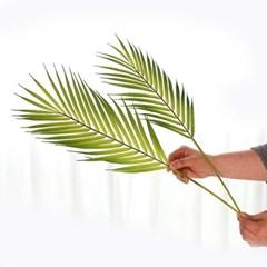 트로피칼 아레카야자 듀오 2P 가지잎