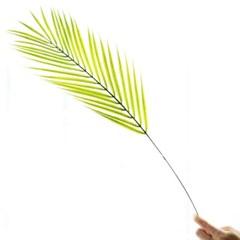 트로피칼 아레카야자 가지잎
