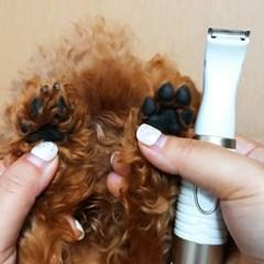 휴대용 미니 강아지 발바닥 귀 털 부분미용 이발기